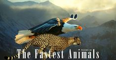The fastest animals – birds, mammals, fish, reptiles and insects