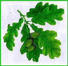 Feuille de chêne, symbole de pérennité dans le mariage à Hauteville (T3)
