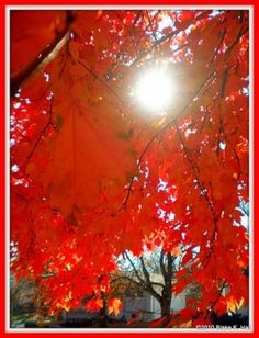 awesome autumn by Adele Snyman
