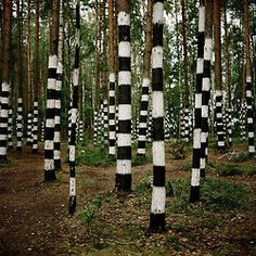 striped woods