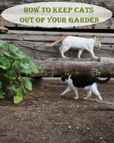 7 Ways to Keep Cats out of Your Garden Gardens I love cats and