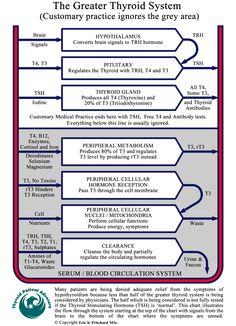 Thyroid chart