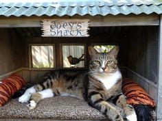 Joey the Garden Cat