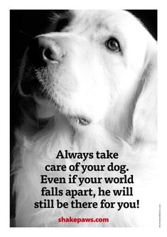 """Always take care of your dog. Even if your world falls apart, he will still be there for you."" ෆ"