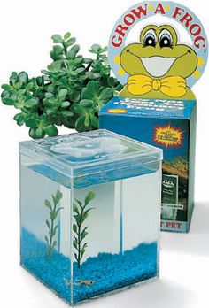 Watch the excitement of students as they observe a tadpole develop into a frog. Kit includes a frog house, food, and mail-in living material card.*
