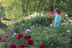 Strolling through the blooming peony beds at the Overland Park Arboretum.