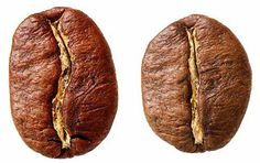 Know your coffee beans - Arabica on the left and Robusta on the right