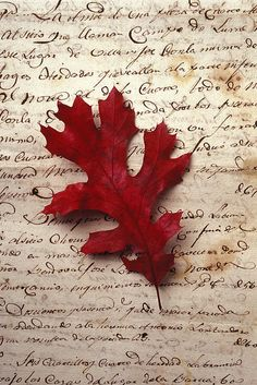 Oak leaf - would this make a beautiful fall framed project? Red Leaves, Autumn Leaves, Falling Leaves, Autumn Harvest, Harvest Moon, Seasons Of The Year, Autumn Day, Hello Autumn, Winter