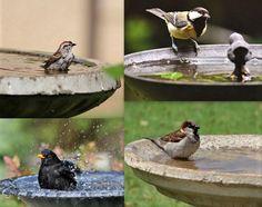 Modèles et idées pour faire un abreuvoir pour oiseaux Bird Feeders, Outdoor Decor, Gardens, Animaux, Teacup Bird Feeders
