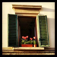 Tulipanes en Italia