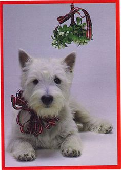 I want a Westie under my Christmas tree!