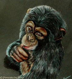 Baby Chimp by stalksthedawn on DeviantArt................................................................ official art name: Portraits by Aleks