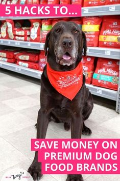 In this post, I'll explain 5 dog mom-approved hacks to help you save money on high-quality premium dog food: 1. Sign up for Rewards Programs at Independent Pet Stores 2. Look for Influencer and Ambassador Promo Codes or Coupons 3. Save Manufacturer's Coupons 4. Stock up on Premium Dog Food and Treats During Sales 5. Supplement Your Dog's Food with Mix-Ins. Give your dog the best food you can afford. I hope my money saving tips help you be the best dog mom! Premium Dog Food, Expensive Dogs, Dog Cleaning, Dog Food Brands, Puppy Food, Dog Care Tips, Dog Training Tips, Pet Gifts, Saving Money