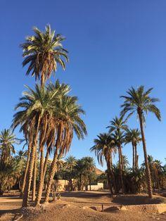 Palmeraie de Beni Isguen, Vallée M'Zab, Algérie