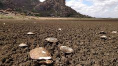 Como açude mais antigo do Brasil virou 'cemitério de cágados' #timbeta #sdv #betaajudabeta
