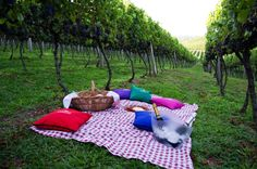Piquenique, Vinícola Larentis - Bento Gonçalves, RS | larentis.com.br | #bentogolcalves #serragaucha #riograndedosul #brasil #brazil #vinicola #vinho #enoturismo #piquenique