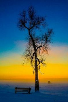 Solitude - One lone tree in the sunset
