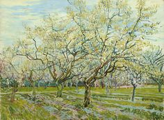 White Orchard by Vincent Van Gogh, oil on canvas 1888, is a #landscape #painting of blooming fruit #trees planted in rows in an #orchard beneath a pale sky in the French countryside of #Arles. With #brushstrokes of thick and thin #oil colors, #VanGogh applies the lessons of #Impressionism to his own unique interpretation of nature. #Poster #Print #Art  www.zazzle.com/justvangogh/gifts?cg=196943082451903444&rf=238581041916875857&tc=pin