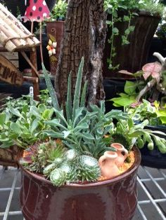 New containers we made using succulents, tropical plants and driftwood. What do you think? #glasshousenursery #chatham #ontario #driftwood #succulents #tropical #planters #plants #containergardening #containers #gardening http://www.facebook.com/theglasshousenursery