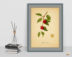 Vintage plum watercolour Botanical digital art poster old paper picture antique home print wall school chart decor cubicle drawing by GecleeArtStudio on Etsy Botanical Wall Art, Old Paper, Cubicle, Wall Prints, Watercolour, Plum, Digital Art, Chart, Antiques