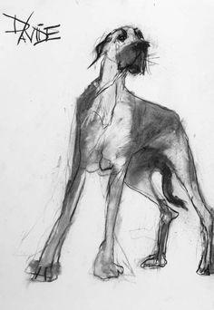 Bosun, by Valerie Davide original charcoal