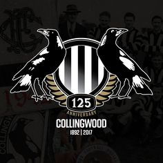125 years celebration Collingwood Football Club, Best Club, Australian Birds, Art Logo, Priscilla Barnes, Sports Teams, Magpie, Fictional Characters, Celebration