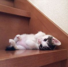 This is one way for a pet cat to descend the stairs… Like a Slinky!