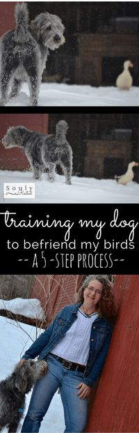 The 5-step process I used in training my dog to like my birds...