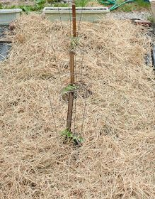 zamanlarda ve havanın rüzgârlı olduğu zamanlarda, bitkideki su Diy Planters Outdoor, Permaculture Design, Garden Spaces, Gardening For Beginners, Farmer, Garden Tools, Backyard, Plants, Peru