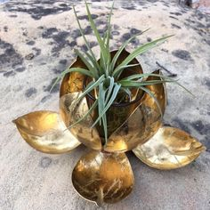 Excited to share the latest addition to my #etsy shop: Gold Metal Lotus & Air Plant, Treat Yourself, Rebirth, Spiritual Enlightenment, Lotus flower, Boho Wedding Decor, Gupta Style, Lotus Style