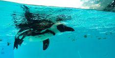 Whale, My Photos, Animals, Whales, Animales, Animaux, Animal, Animais