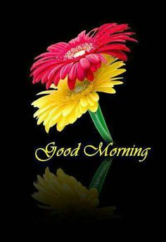 Good morning sister have a nice day Good Morning Beautiful Flowers, Good Morning My Love, Good Morning Picture, Morning Pictures, Morning Pics, Goog Morning, Morning Board, Nice Flower, Morning Texts