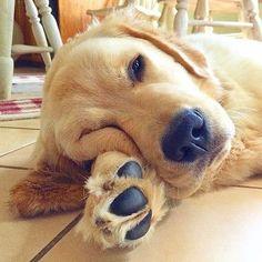 Imagens fofas (17) Animals And Pets, Baby Animals, Funny Animals, Cute Animals, Beautiful Dogs, Animals Beautiful, Cute Puppies, Dogs And Puppies, Maltese Puppies