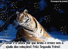 Tigre - Imagens, Mensagens e Frases para Facebook
