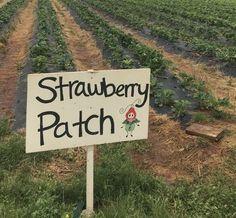 Strawberry Patch, Strawberry Fields, Strawberry Shortcake, Strawberry Picking, Strawberry Blonde, Strawberry Tea, Paradis Sombre, Verde Vintage, Leelah