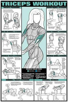Workout Fitness Chart (Co-Ed) Buy your Triceps Workout Fitness Chart (Co-Ed) at !Buy your Triceps Workout Fitness Chart (Co-Ed) at ! Fitness Workouts, Fitness Gym, Body Fitness, Fitness Goals, Mens Fitness, At Home Workouts, Fitness Motivation, Health Fitness, Workout Routines