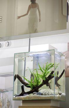 Tall Fluval Edge aquarium, nanotank, aquascape, by George Farmer