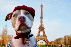 Petite French Beret for Large Breeds by AllYouNeedIsPugShop