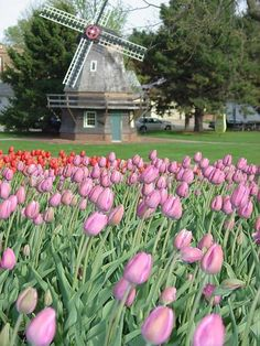 Pella, Iowa Tulip Time festival...A Touch of Holland the 1st weekend every May