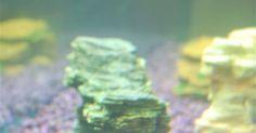 Como limpar um aquário turvo