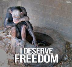 zoos/ animal testing/ it's all SHAMEFUL. stop endorsing them. #spreadlove ++