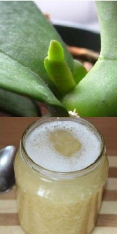 Create A Garden To Remember With This Useful Advice - AmigurumiHouse Bamboo House Plant, House Plants, Artificial Orchids, Orchid Care, Recipe Of The Day, Horticulture, Vegetable Garden, Beautiful Gardens, Food Photography