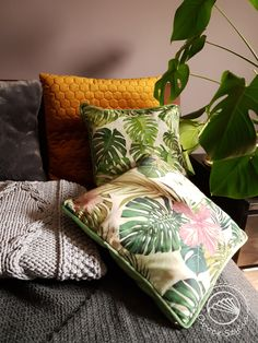 Plants & pillows