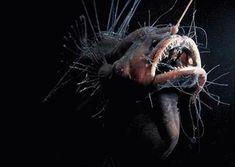 deep sea life photos | fanfin - deep sea life Photo (13665696) - Fanpop fanclubs