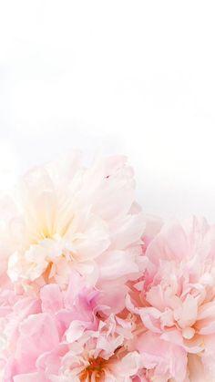 꽃 폰배경화면 : 네이버 블로그