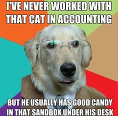 business dog meme cat in accounting