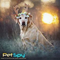 E Collar for Dogs is generally attached to the pet's usual collar with strings or tabs passed through holes punched in the sides of the plastic. Visit us at www.petspy.com. Shock Collar, Hole Punch, Dog Training, Collars, Plastic, Horses, Pets, Animals, Necklaces