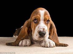 犬はまったく面識のない人の感情すら読み取ることができる(ニュージーランド研究) - グノシー