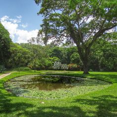 Who is ready for an adventure? #mondaymotivation Let's explore the Exotic Tropical Flora Park Our Lady of Carmen in San Felipe, Yaracuy, Venezuela. This park, designed by French landscape botanist Jean Philippe Tose, houses more than five thousand plants from India, Colombia, Costa Rica, Cuba, Trinidad, Italy, Martinique, Jamaica, Malaysia, Japan, Argentina, Venezuela and Brazil. Amazing pic by @abeja_gf #beautifullatinamerica