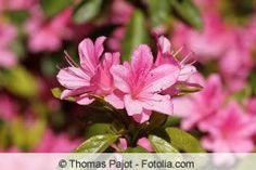 85 Winterharte immergrüne Pflanzen - Liste und Übersicht Plantation, Plants, How To Make, Gardening, Joy, Outdoor, Gardens, Trees And Shrubs, Lawn